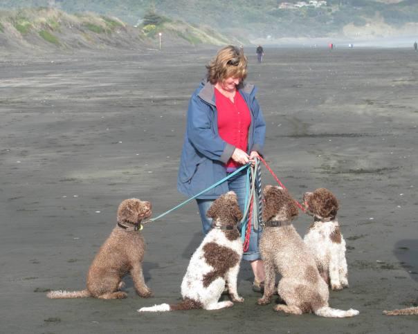 Dora & dogs at Muriwai beach
